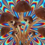 denver hongos alucinogenos