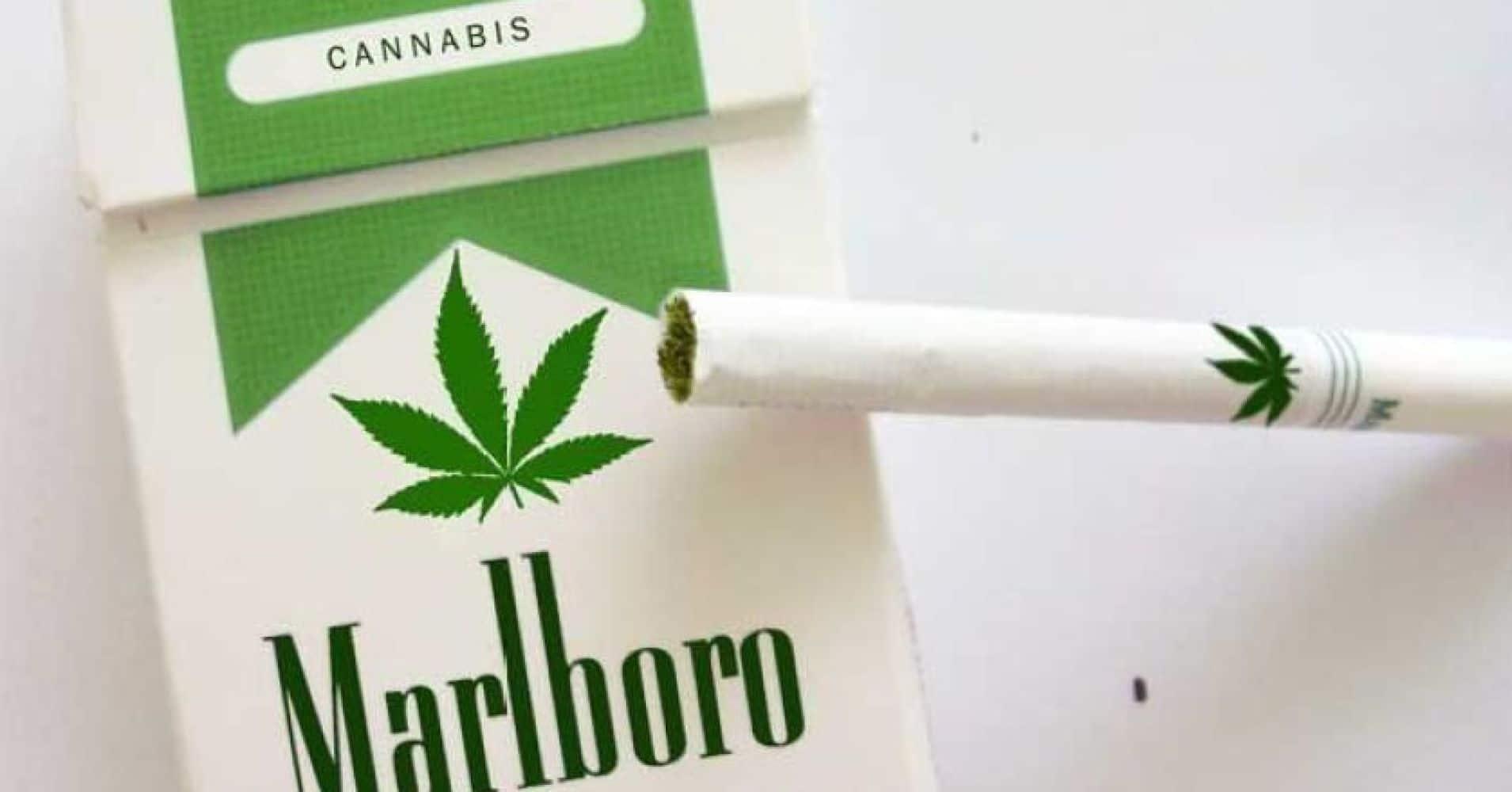 tabaco se reconvierte con la marihuana