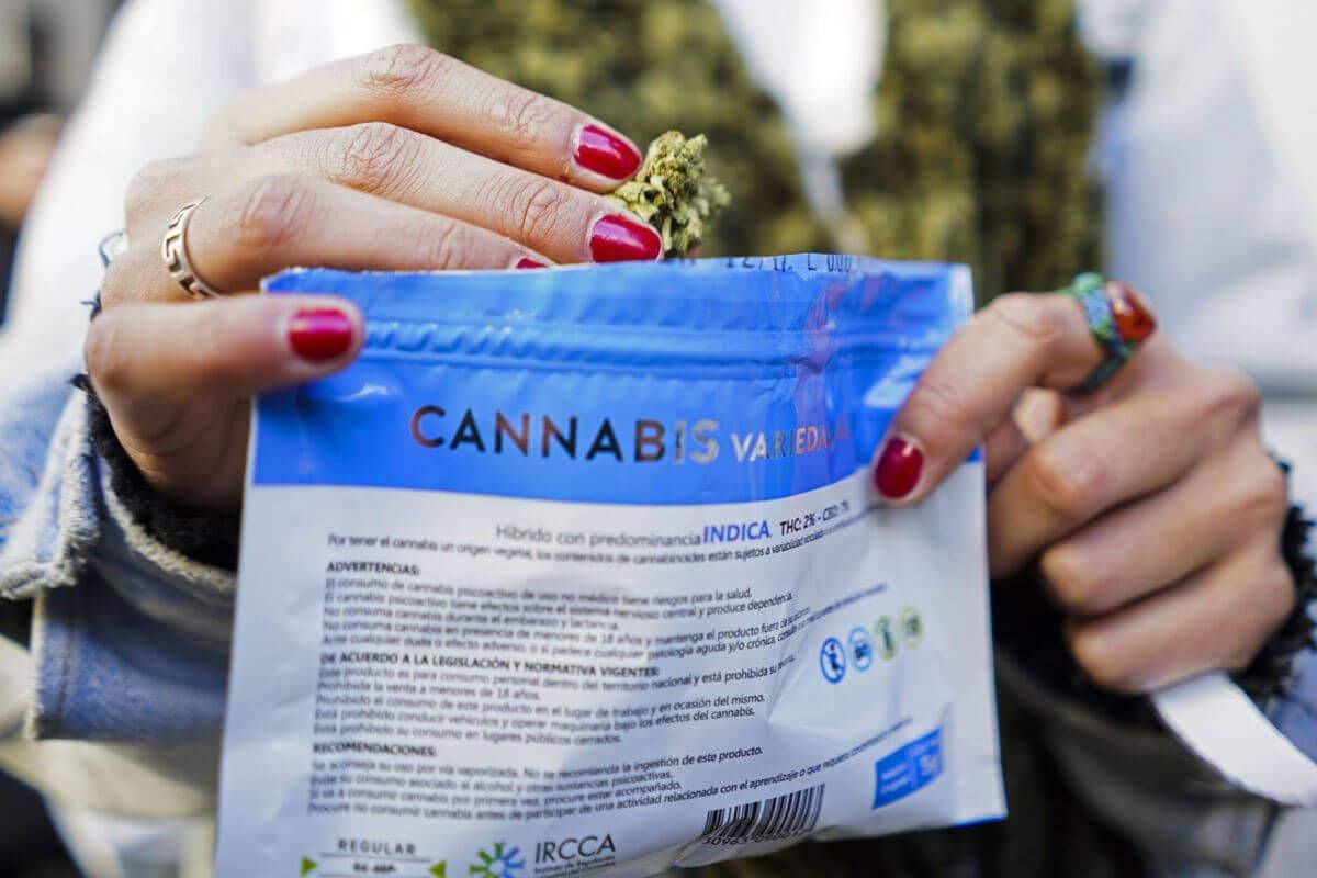Cae el narcotráfico de marihuana en Uruguay