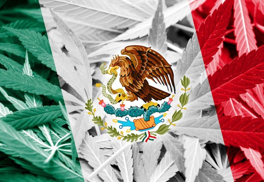 Avanza en México la legalización de la marihuana recreativa |