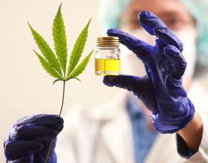 cannabis medicinal y terapéutico